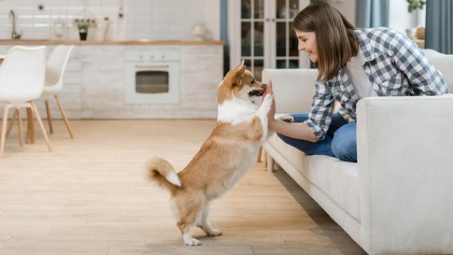 Los pelos de nuestros animales de compañía son, en muchas ocasiones, grandes enemigos de la limpieza.