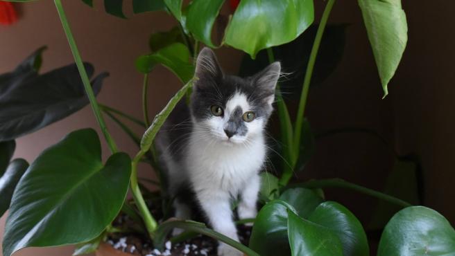 Un gato curioseando alrededor de una planta.