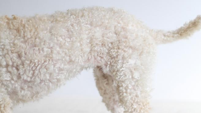 La muda de pelo es un proceso natural para cualquier perro.