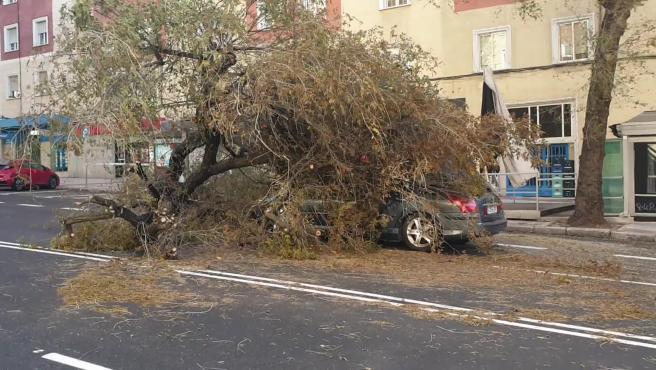 Un árbol, en pleno centro de Madrid, ha caído por las fuertes rachas de viento que sufre la ciudad sepultando a un coche que pasaba en ese preciso momento por la zona, y dejando a su conductor atrapado bajo las gigantescas ramas. Los bomberos han tenido que intervenir para sacarle del vehículo.