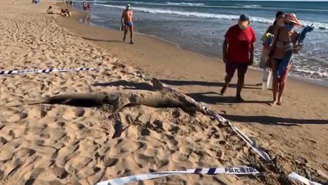 Imagen del tiburón muerto en Guardamar del Segura.