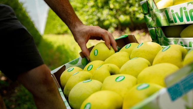 Carrefour aumenta su compra de manzanas en España