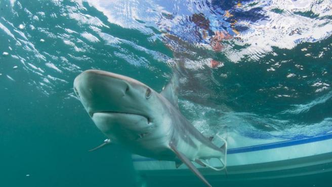 Imagen de archivo de un tiburón.
