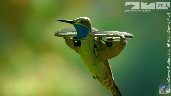 Un colibrí espía captando unas increíbles imágenes.
