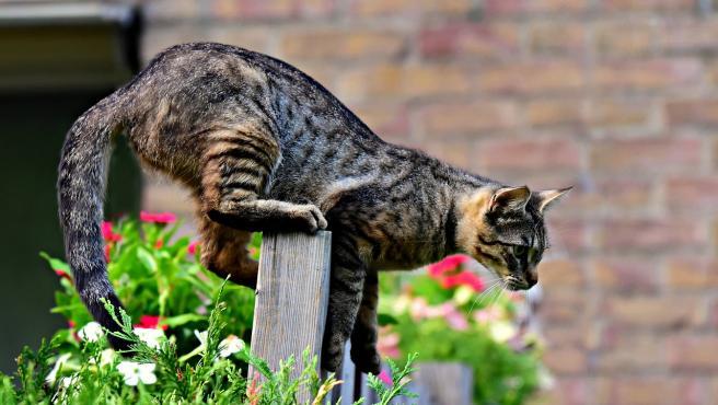 Un gato observando con atención.