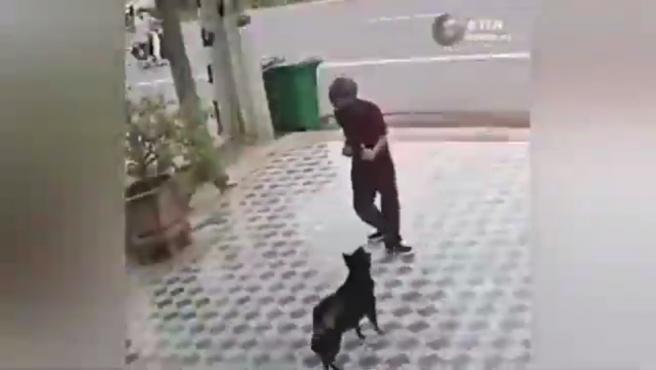 Los perros intentan atacar el hombre y este se defiende al estilo Karate Kid.