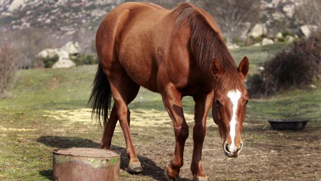 Un caballo.