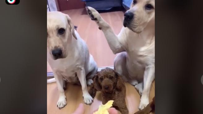 Momento en el que el perro chivato delata a su compañero.