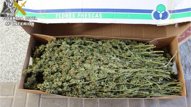 Una caja con las plantas intervenidas