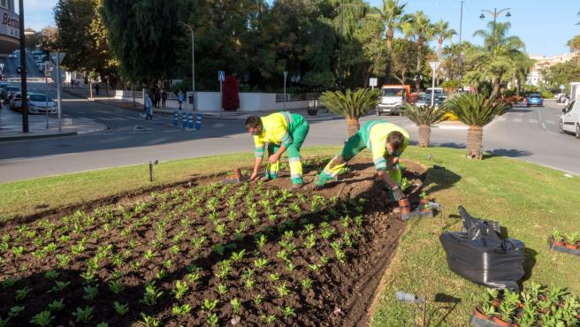 Plantación, flores, jardines, Ayuntamiento de Estepona