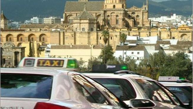 Facua Córdoba critica que el Ayuntamiento sigue incumpliendo la normativa del sector del taxi