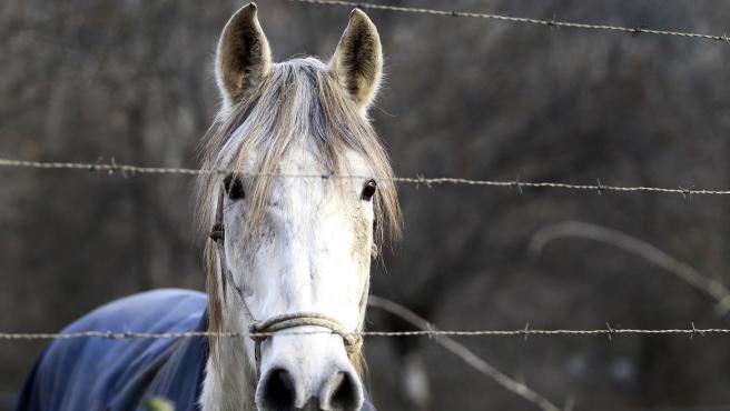 Un caballo en el campo.