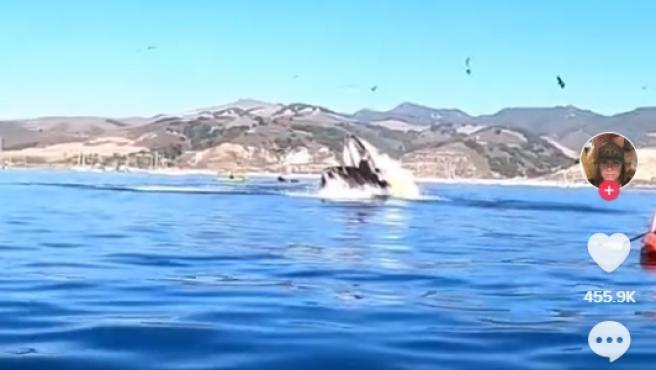 El momento del salto de la ballena.