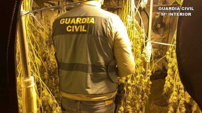 La Guàrdia Civil desmantella una plantació de marihuana situada en un xalet de luxe d'Altea