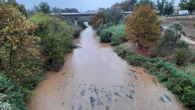 Efectos de las lluvias en Alzira
