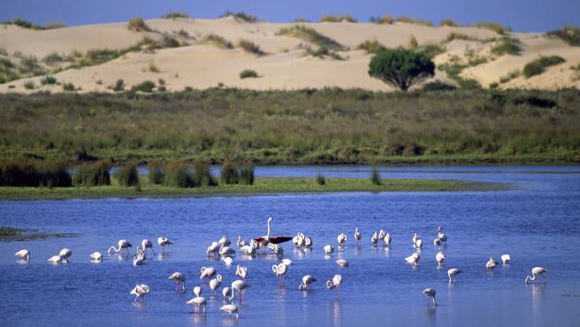 El humedal de Doñana, un paraíso para las aves migratorias.