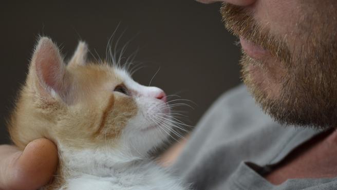 Cuando felino nos mira y parpadea lentamente ofrece que lo que se conoce como 'beso de gato'.