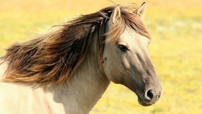 En el caso de los caballos el tiempo de espera para el nacimiento de los potros es de entre 11 y 12 meses, aunque si es macho puede tardar más que si es hembra. Ya desde los 310 días de gestación las crías pueden sobrevivir.