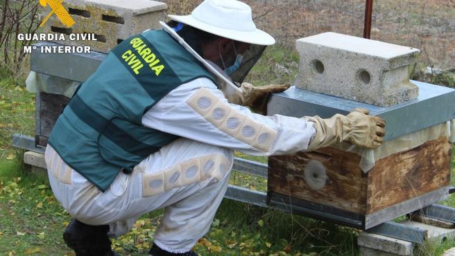 Un agente de la Guardia Civil recupera la colmena que había sido sustraída.
