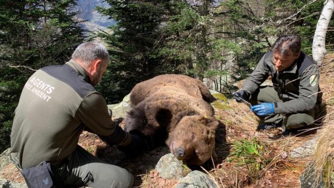 El oso Cachou junto a dos agentes del Miei Ambient