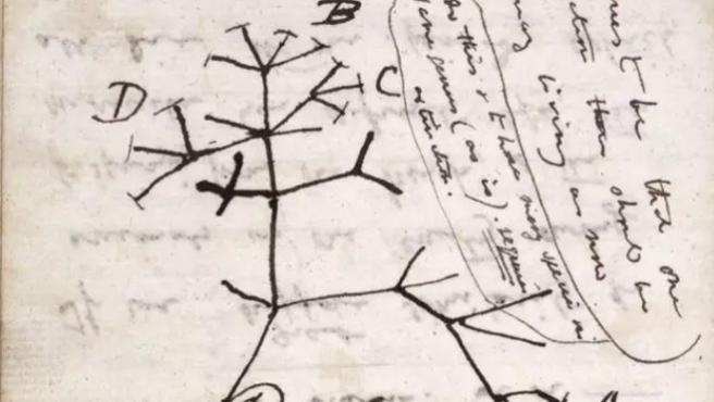 Imagen del árbol de la vida dibujado por Darwin en un cuaderno de notas que probablemente ha sido robado.