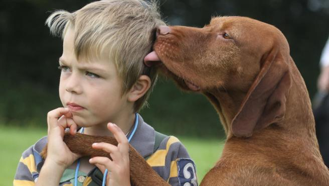 Un perro lamiendo a un niño. Winners of the Kennel Club Photographer of the Year 2012 England - October 2012