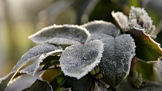 El hielo es uno de los grandes enemigos de las plantas de exterior.