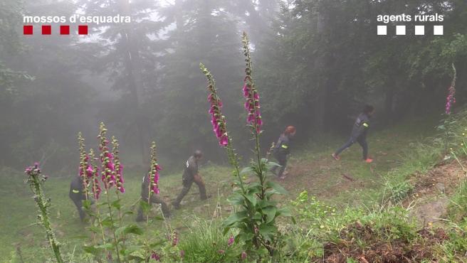 Mossos d'Esquadra y Agents Rurals actúan en el Pirineu por la muerte del oso Cachou.