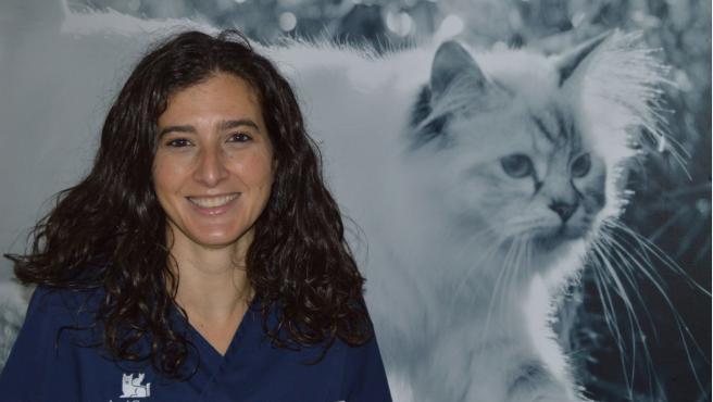 Inmunodeficiencia Felina Qué Es El Sida De Los Gatos Y Qué Síntomas Produce