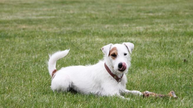 Un perro con un hueso.