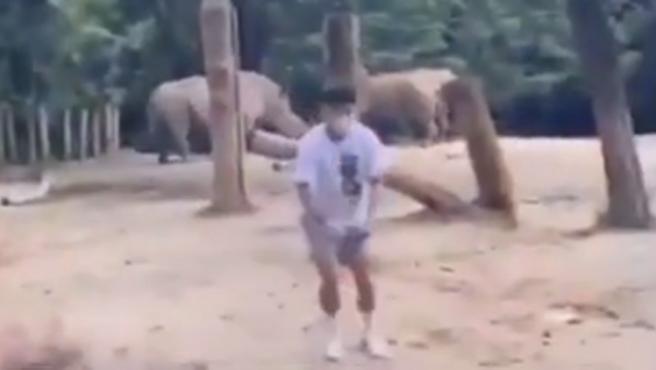 El joven en el recinto de los rinocerontes.
