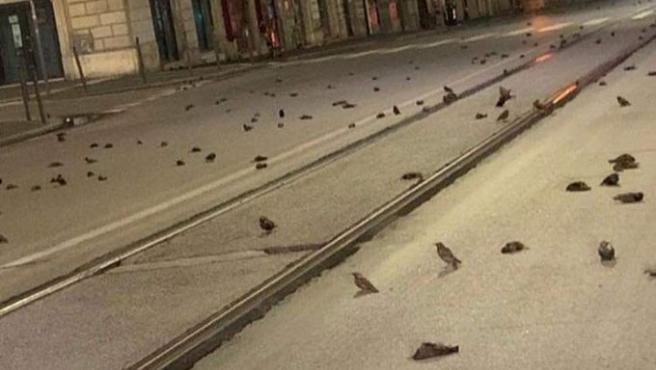 Pájaros muertos en Roma