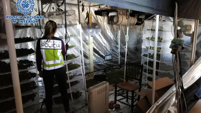 La Policía Nacional ha detenido a dos personas y ha desmantelado una plantación 'indoor' de marihuana incautando 82 kilos de esa sustancia