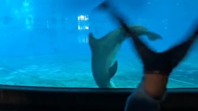 El delfín imitó los movimientos del joven.