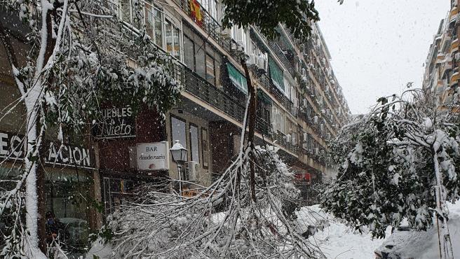 Imagen de una rama de un árbol caída en Madrid por el peso de la nieve acumulada.