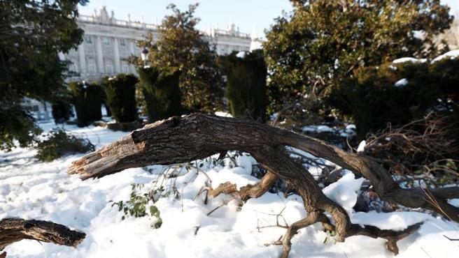 Árboles caídos junto al Palacio Real de Madrid tras el paso de la borrasca Filomena.