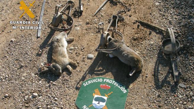 La Guardia Civil interviene métodos de caza no selectivos para la captura de pequeños mamíferos.