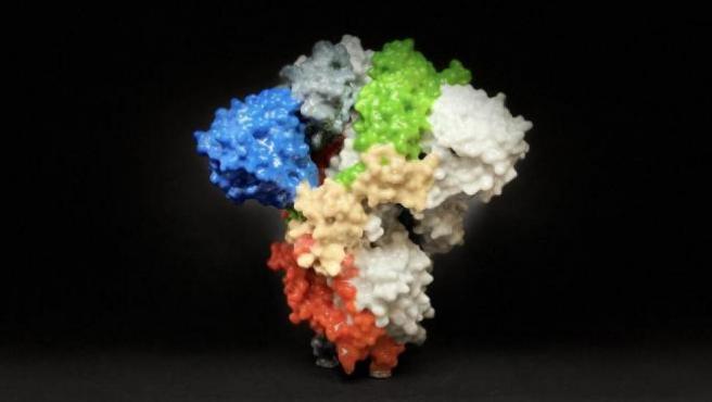 La imagen muestra una impresión 3D de una proteína espiga en la superficie del SARS-CoV-2, el virus que causa COVID-19.