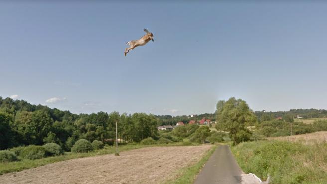 Liebre 'voladora' captada en una carretera en Polonia.