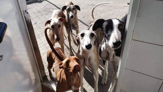 Animales recogidos durante 2020 por la Protectora de Animales de Segovia.