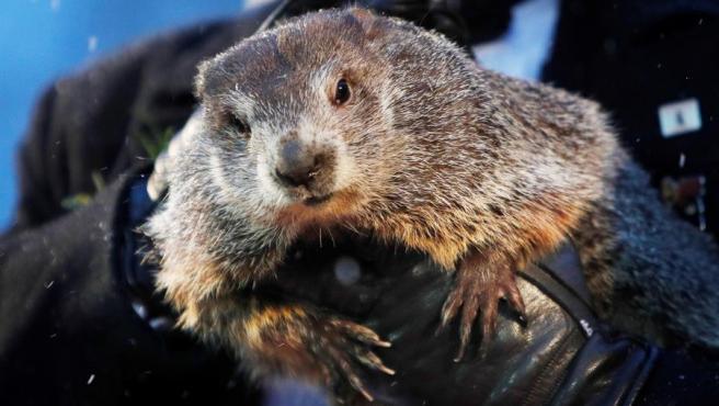 La celebérrima marmota Phil 'predice' que la primavera llegará antes a EE UU