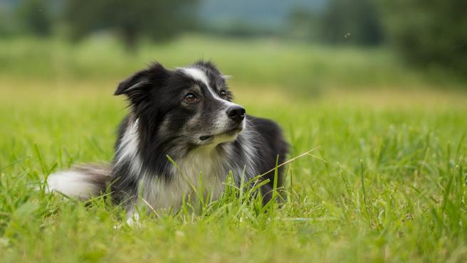Imagen de archivo de un perro.