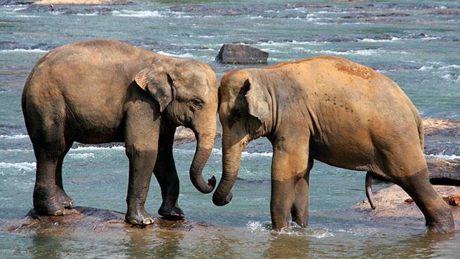 Los acelerómetros están impermeabilizados para que resistan los baños elefantinos.