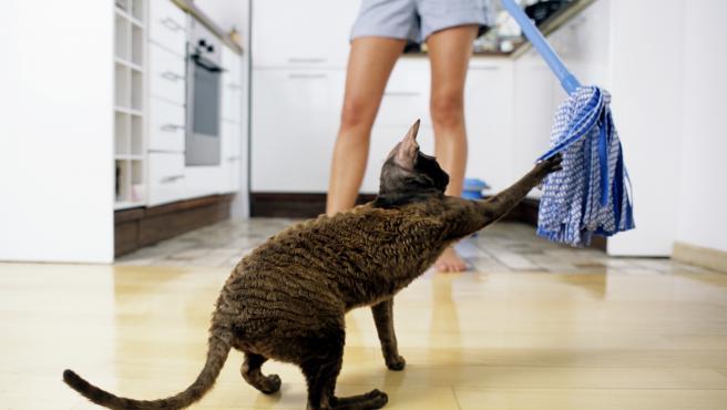 La estimulación del gato a través del juego favorece un correcto desarrollo físico y psíquico del animal.