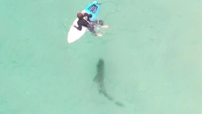 Un surfista se encarama a su tabla instantes después de haber pisado a un tiburón.
