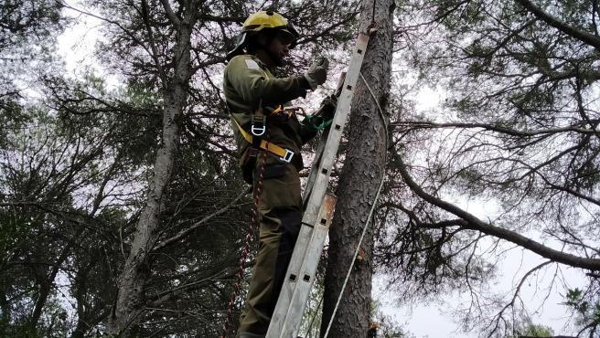 Un miembreo del personal de S'Albufera des Grau instalando cajas nido para murciélagos.