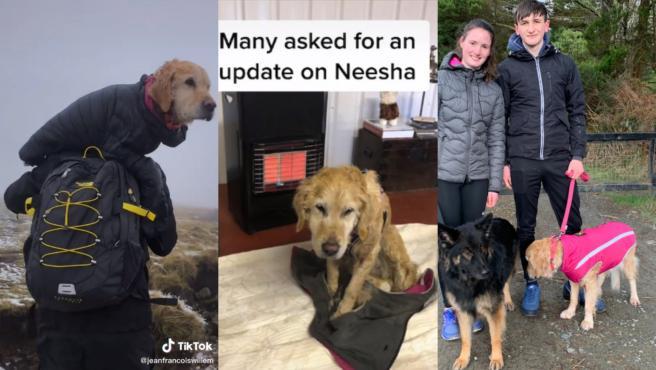 Una pareja rescata a una perrita que se había perdido en la montaña.