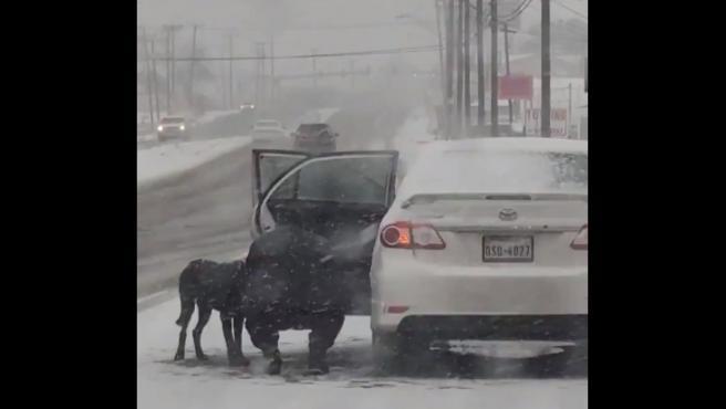 Kristin no dudó en rescatar al perro callejero.