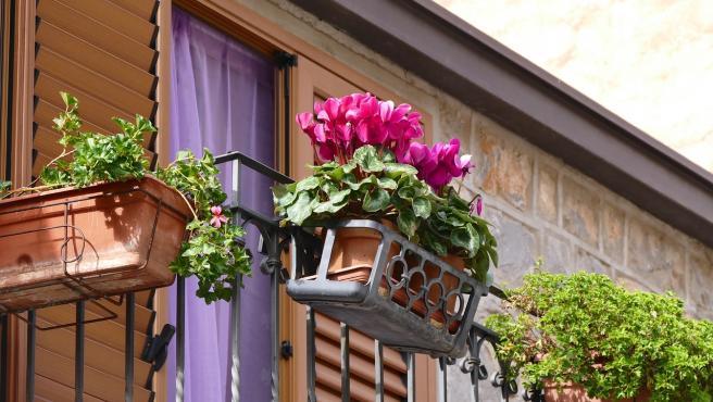 Unas jardineras con plantas en un balcón.