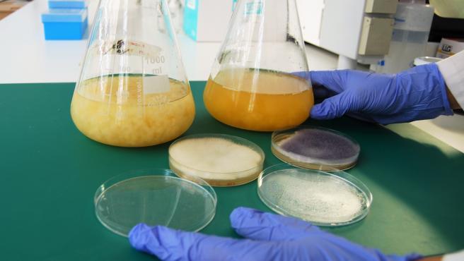 Archivo - Personal investigador del área de biotecnología